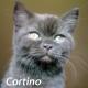 miot_c_cortino7